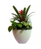 Composición de plantas naturales en base de cerámica