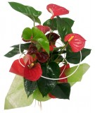 Anthurium decorado 50 CM.