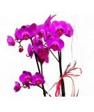 Cesta de orquídeas. Mod. 2