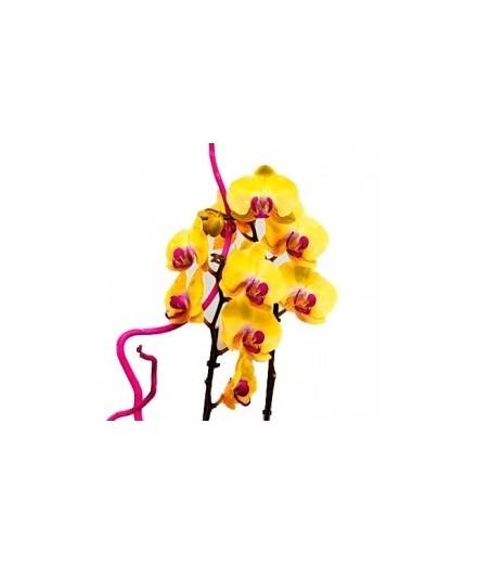 Cesta de orquídeas. Mod. 1