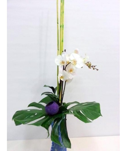 Ramo de orquídeas blancas