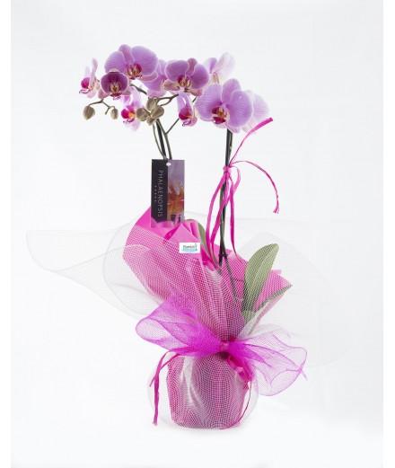 Orquidea rosa decorada