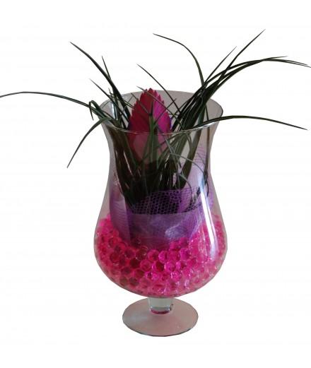 Tillandisia en copa de cristal